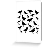 birds icons over white background,vector illustration Greeting Card