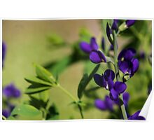 Lavender Colored Stems Poster