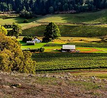 Vines in the Valley by Peter Evans