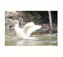 White Female Duck Art Print