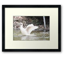 White Female Duck Framed Print