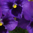 purple trio by ANNABEL   S. ALENTON