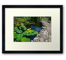 Lilly Pads in a Pond Framed Print
