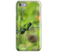 Bronze Tailed Plumeleteer Hummingbird iPhone Case/Skin