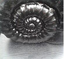 Ammonite Oil by Aaran Bosansko