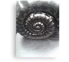 Ammonite Oil Canvas Print