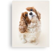Lily the Cavalier King Charles Spaniel Canvas Print