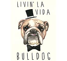 Livin' La Vida Bulldog - English Bulldog Photographic Print
