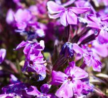 Tiny Bright Purple Flowers Sticker