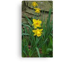 Garden Daffodils Canvas Print