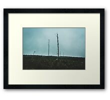 Desolate Trees Framed Print