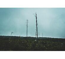 Desolate Trees Photographic Print