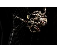 The Dining Spider Photographic Print