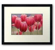 Tulips Entwined Framed Print