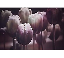 Tulips in The Dark  Photographic Print