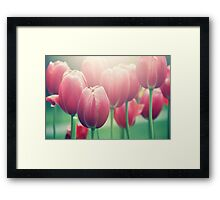 Tulips in The Sun  Framed Print