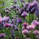Purple Herbs by naturelover