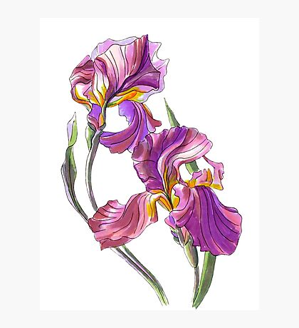 Irises-1 Photographic Print