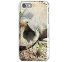 Pig Lying in Mud iPhone Case/Skin