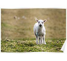 Donegal Lamb Poster