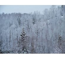 A snowy spring scene. Photographic Print