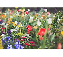 colorful flower bed with many spring flowers Photographic Print