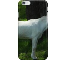 White Horse Next to a Fence iPhone Case/Skin