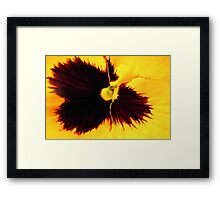 Yellow and Black Pansy Framed Print