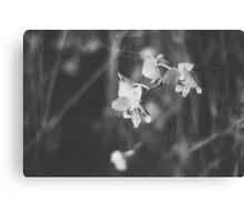 Precious petals Canvas Print
