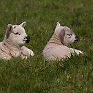 The twins by Jennifer Bradford