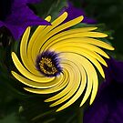 Yellow Daisy by Kathy Weaver