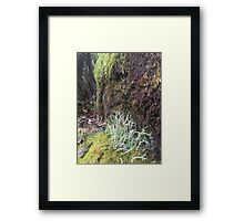 Moss and Lichen Log Bruny Island Framed Print