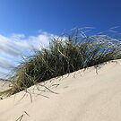 SAND DUNE IN THE WIND  by karmadesigner