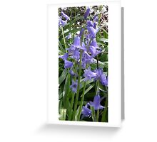 Bluebell Woods 4 Greeting Card