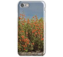 Orange Apricot Globemallow  iPhone Case/Skin