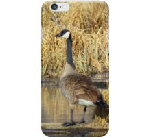 """Canadian Geese, """"I Think They 're Watching Us"""" iPhone Case/Skin"""