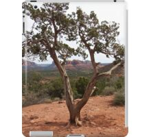 Old Earth, New View of the Desert iPad Case/Skin