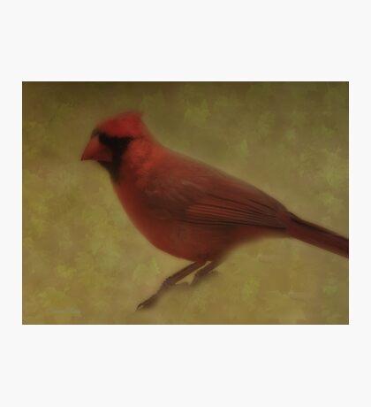 Spring Cardinal Photographic Print