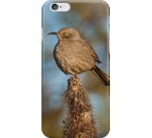 Curve-Billed Thrasher on a Cactus iPhone Case/Skin