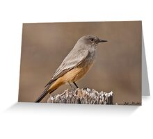 Say's Phoebe on a Fence Post Greeting Card