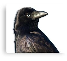 Handsome Crow Canvas Print