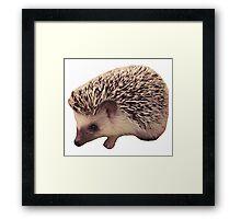 Hedgehog Framed Print