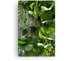 Green leaves next to a classical column. Canvas Print