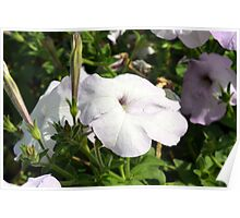 Beautiful light purple flowers in the garden. Poster