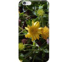 Many joyful yellow flowers in the garden. iPhone Case/Skin