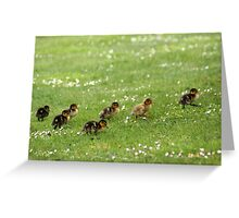 Ducklings and Daisies Greeting Card