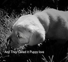 AND THEY CALLED IT PUPPY LOVE by leonie7
