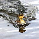Racing Duckie by Jo Nijenhuis