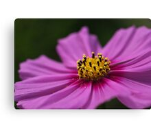 Pink Wish Canvas Print