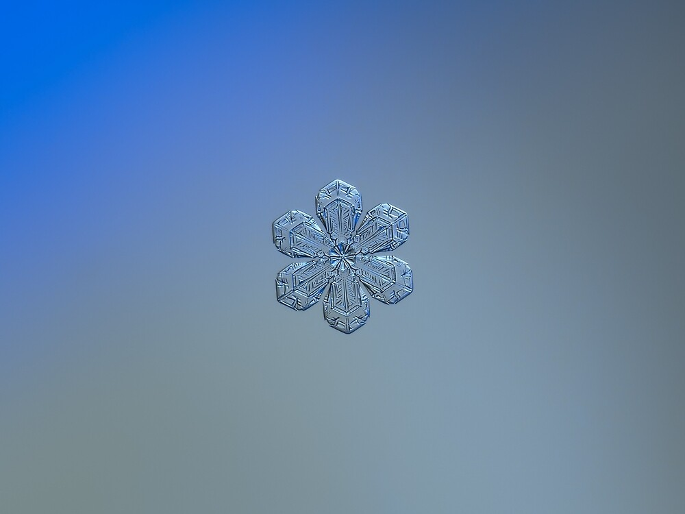 Forget-me-not, real snowflake photo (gradient background) by Alexey Kljatov